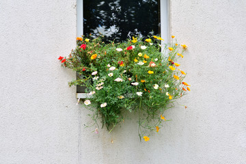 Flowers in windowsill of an exterior wall with copy space