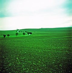 Foto auf AluDibond Grun Trees On Countryside Landscape