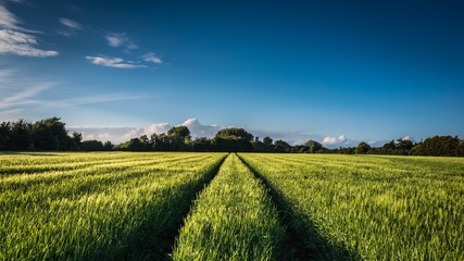 Scenic View Of Agricultural Field Against Blue Sky Fototapete