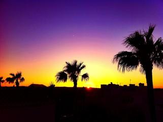 Foto auf AluDibond Violett Palm Trees On Silhouette Landscape And Against Scenic Sky