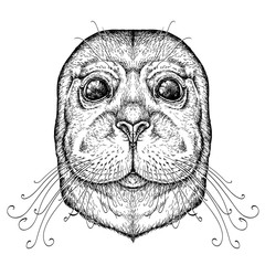 Canvas Prints Hand drawn Sketch of animals Hand drawn portrait of Funny Seal. Vector illustration isolated on white