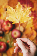 Yellow maple leaf in man's hand over variety of red and yellow autumn leaves with apples and nuts. Flat lay. Fall creative background.