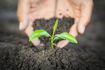 Fototapeta Hands of farmer growing and nurturing tree growing on fertile soil,  environment Earth Day In the hands of trees growing seedlings,  protect nature obraz