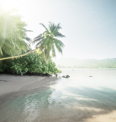 Fototapete - beach on Mahe island, Seychelles