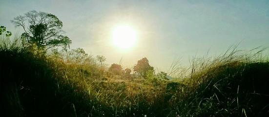 Foto auf AluDibond Rosa dunkel Plants On Countryside Landscape