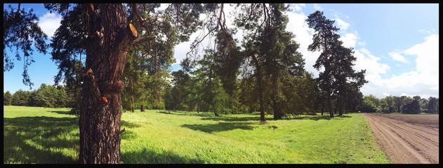 Foto auf Gartenposter Grau Verkehrs Trees On Countryside Landscape