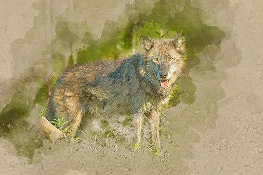 Timber wolf computer art