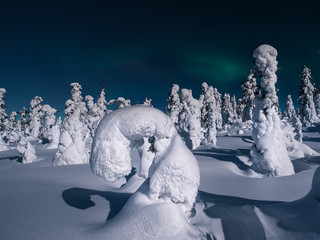 Foto auf Leinwand Nordlicht Arctic Sculpture. Snow-covered trees look like sculptures on the slopes of Volosyanaya Sopka. Arctic. Murmansk region