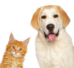 Wall Mural - Kitten and puppy together, isolated