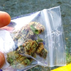 Poster Océanie Cropped Hand Holding Marijuana In Plastic On Field