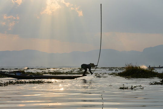 Lake Inle fishermen beat the water with long sticks to scare fish in to their nets