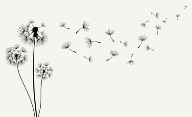 Fototapeta Hand drawn of Dandelions. Vector illustration