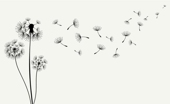 Hand drawn of Dandelions. Vector illustration