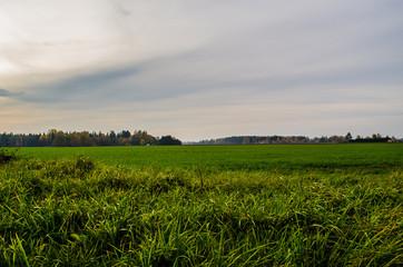 Fotobehang Rijstvelden Scenic View Of Field Against Sky