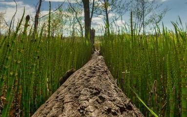 Fototapeta Kłoda drewna w tataraku obraz