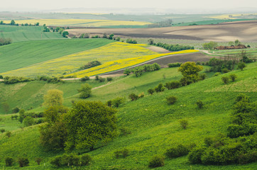Rural spring landscape
