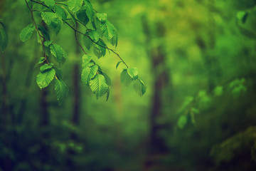 Spring green forest