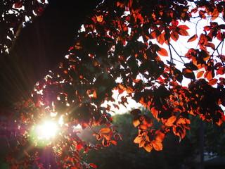 Deurstickers Kersenbloesem Low Angle View Of Tree Against Sky
