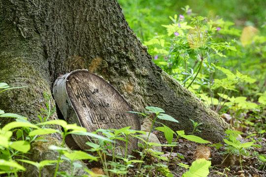 Ruhestätte auf einem Waldfriedhof