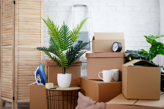 moving day concept - close up of cardboard boxes, houseplants and other domestic things in living room