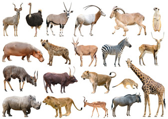 Wall Mural - collection of africa animal isolated