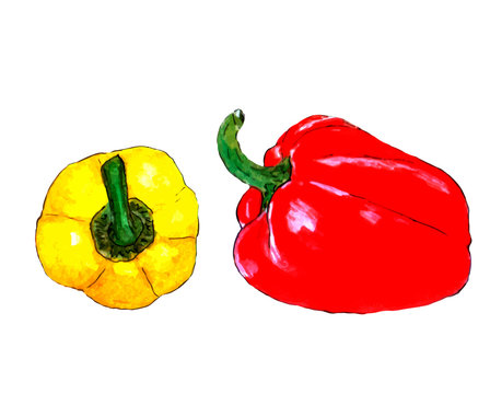 Yellow and red sweet pepper vector, yellow pepper, red pepper