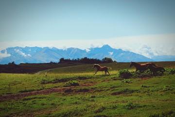 Horses Running On Grassy Field Against Sky
