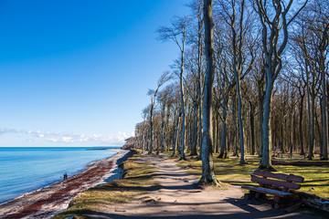 Wall Mural - Gespensterwald an der Küste der Ostsee in Nienhagen