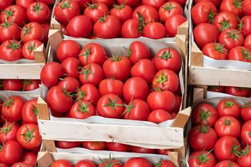 Italian Tomato in Crates