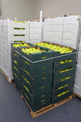 Peppers in Boxes at Pallet Storage