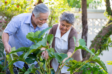 Smiling mature couple engaged and watering plant in garden front home. Asian senior planting together concept