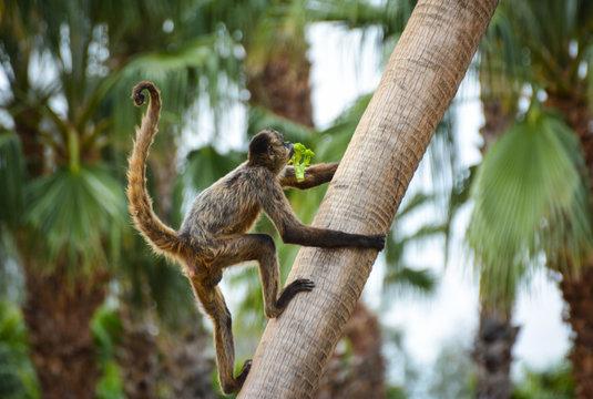 Low Angle View Of Monkey Climbing Palm Tree