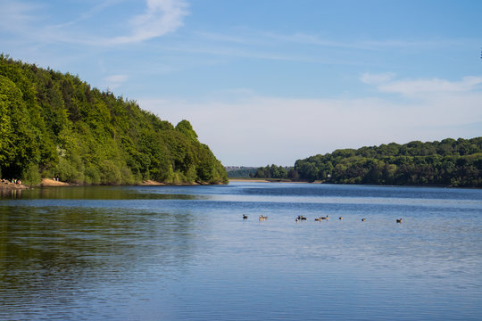 Damflask Reservoir in Spring with birds