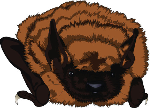 Little Brown Bat Realistic Wildlife Vector