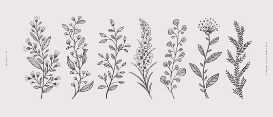 Big set of hand-drawn curly flowers. Wild herbs vector illustration. Floral design element for greeting card, poster, cover, invitation. Botanical retro image for a garden background.