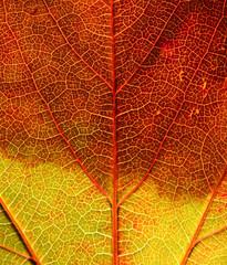 Extreme Close Up Of Leaf