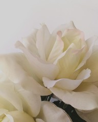 Fotobehang Close-up Of White Flower