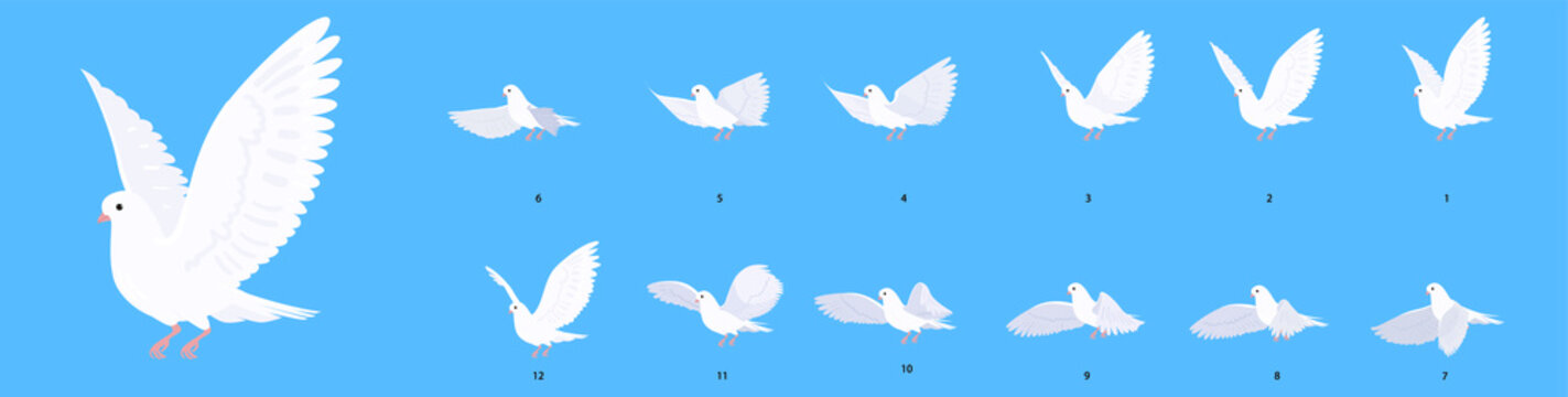 A beautiful white dove. Full cycle animation of a flying pigeon. Set of illustrations in cartoon style.
