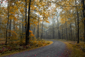 Keuken foto achterwand Weg in bos Road Amidst Trees In Forest During Autumn