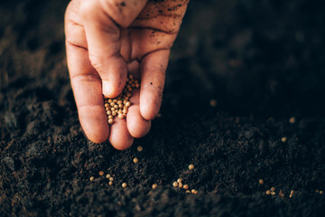 Fototapeta Hand growing seeds on sowing soil. Background with copy space. Agriculture, organic gardening, planting or ecology concept. Sustainable business investment. Gospel spreading obraz