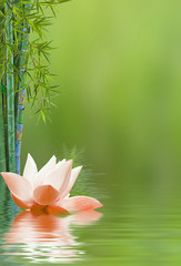 Foto auf Gartenposter Lotosblume pink lotus flower
