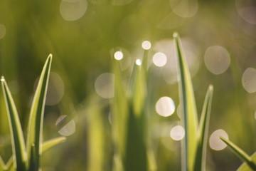 Grass field wallpaper in sunny morning