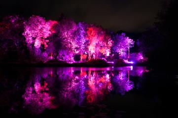 Fotomurales - Colorful Illuminated Trees Reflecting On Lake At Park
