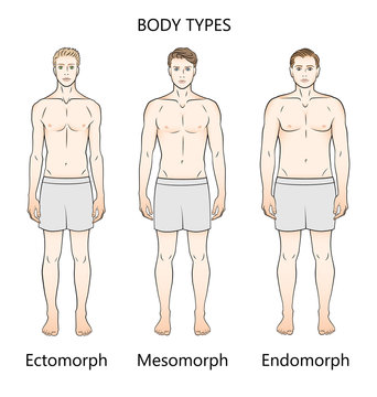 Human body types. Three figures. Forms: ectomorph, mesomorph and endomorph.