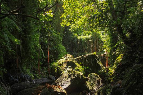 Dense equatorial vegetation tropical rainforest