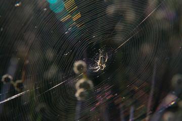 pająk sieć natura wiosna promienie insekt - fototapety na wymiar