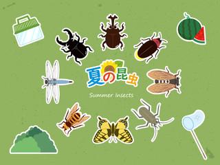 カワイイ夏の昆虫セット 白縁