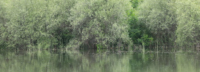 lush green vegetation on the shore of a pond