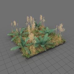 Fern meadow patch