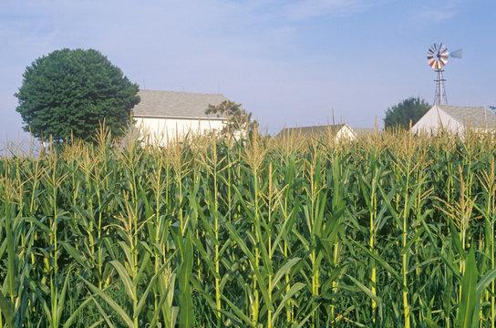 Corn field, South Bend, IN